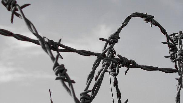 Wire, Fence, Barbed, Protection, Barbwire, Separation