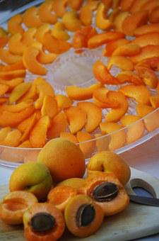 Apricots, Fruit, Orange, Pips, Sliced, Drying