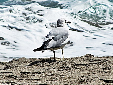 Loan Gull, Frothing Sea, Sand, Precipice, Ocean