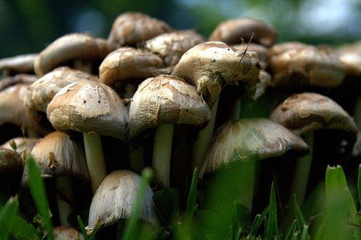 Mushroom, Food, Organic, Field Veg, Vegetable, Meal