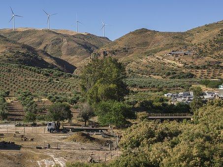 Landscapes, Montes, Eucalyptus, Olive Trees, Regajos
