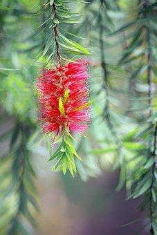 Flower, Red, Green, Nature, Petals, Spring, Summer