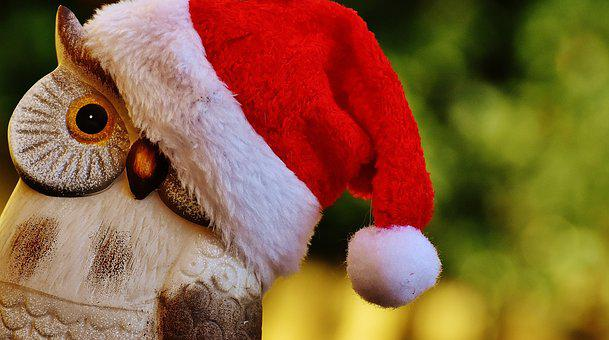Christmas, Owl, Santa Hat, Contemplative, Fig