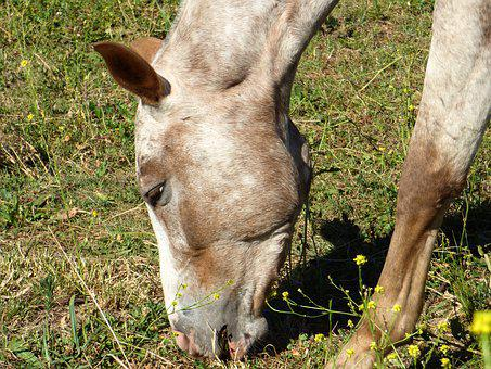 Equine, Animal, Four Legged, Horse
