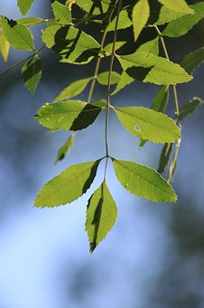 Leaves, Reverse Light, Branch, Tree, Nature, Green