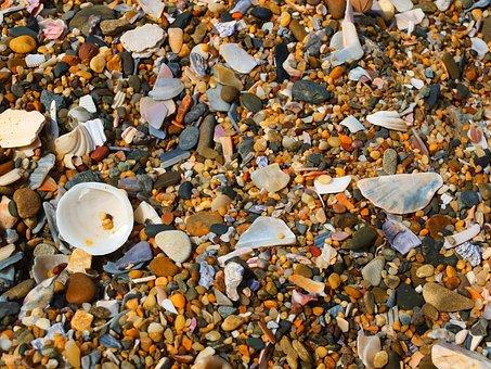 Shell, Sand Beach, Stone, Texture, Surface, Properties