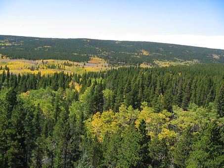 Trees, Rocky Mountains, Forest, Background, Landscape