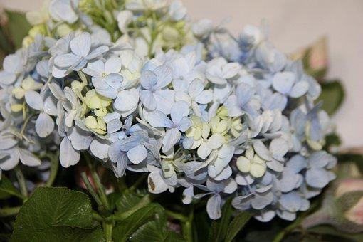 Blue Hydrangeas, Flower Arrangement, Wedding Decoration