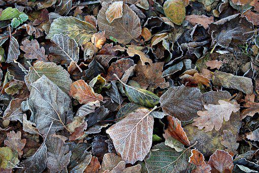 Frost, Leaves, Cold, Nature, Frozen, Winter, Autumn