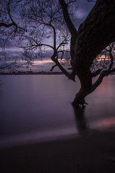 Hamburg, Blankenese, Elbe Beach, Beach, Tree