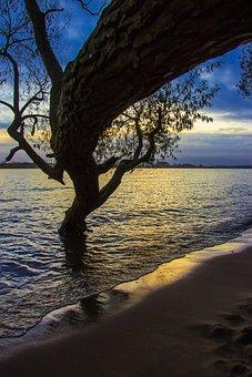 Elbe, Beach, Elbe Beach, Tree, Water, Landscape, Sand