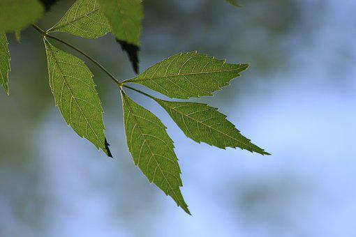 Leaves, Branch, Green, Reverse Light, Tree, Nature