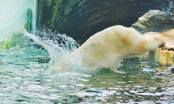 Jump, Water, Bear, Nature, Water Drops, Surface