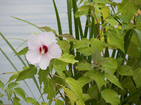Flower, Water, Pond, Summer, Leisure, Lake, Pool, Plant
