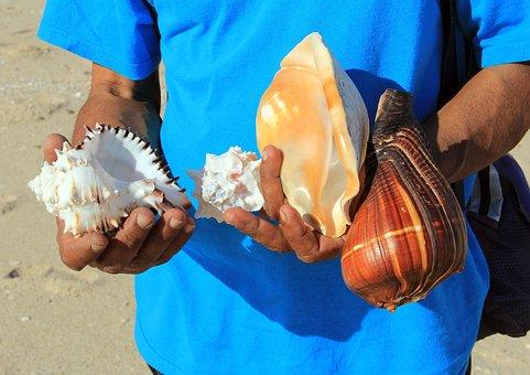 Seashell, Beach, Sea, Shell, Vacation, Summer, Coast