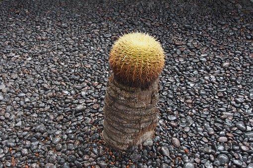 Cactus, Single, Succulent