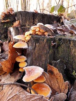 Mushroom, Nature, Autumn, Frost, Forest, Butt