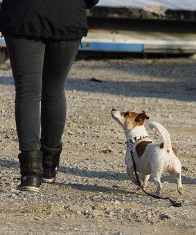 Single Workout, Dog Training, Dog Trainer