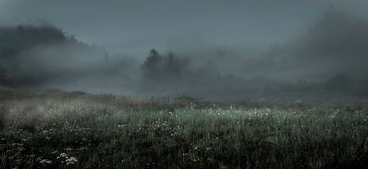 Morning, Fog, Landscape, Mood, Nature, Sunrise, Trees
