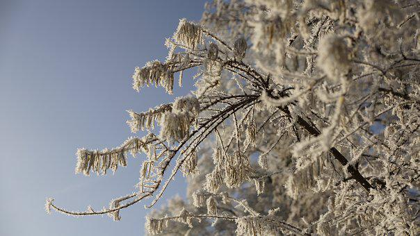 Tree, Winter, Ice, Snow, Sky, Blue, Leaf, Leaves, White