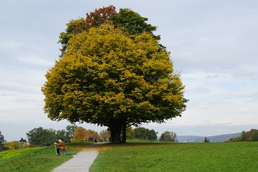 Tree, Meadow, Autumn, Age, Park