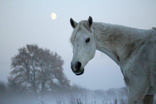 Horse, Mold, Winter, Moon, Fog, Frost