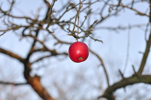 Autumn, Apple, Fruit, Garden, November, Tree