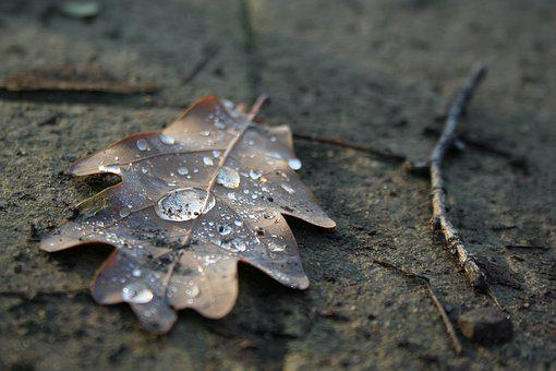 Autumn, Fall Leaf, Dry Leaf, Autumn Woods, Brown