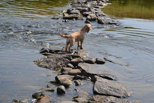 Dog In The Water, Refreshment, Wanderlust, Summer