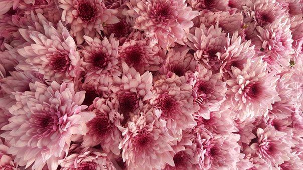 Flowers Bouque, Flower, Plants, Nature, Spring, Flowers