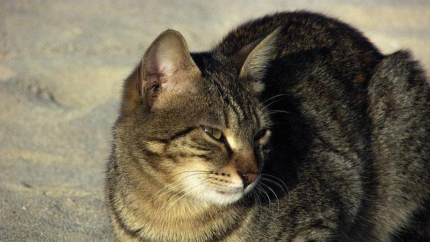Cat, Stray, Beach, Animal, Cute, Outdoor, Homeless