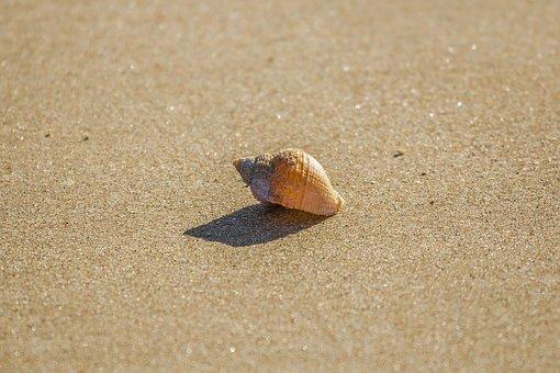Beach, Shell, Ocean, Low Tide, South Wales, England