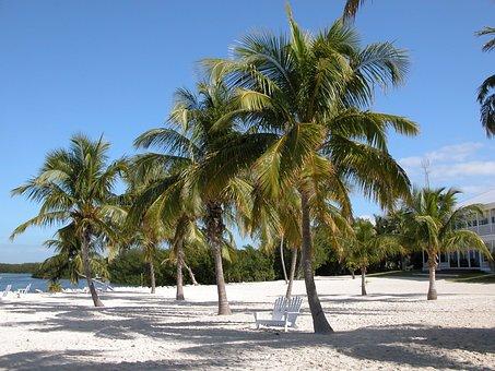 Florida, Ocean, Keys, Beach, Travel, Vacation, Sea