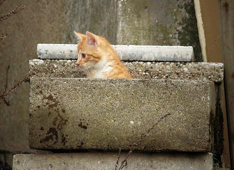 Kitten, Hiding Place, Stone, Cat, Stone Wall, Concrete