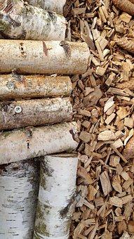 Birch, Fir, Wood, Nature, Forest, Conifer, Trees