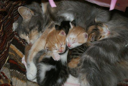 Baby, Cats, Mama, Pets, Sleep, Cute, New Born