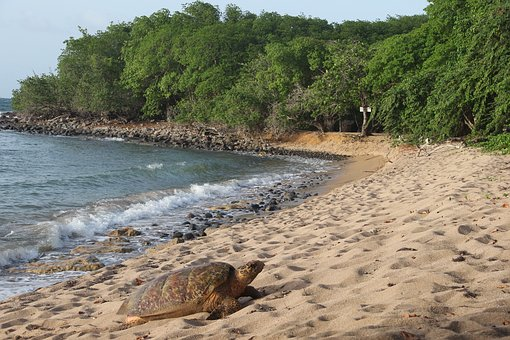 Guadeloupe, High-land, Beach, Turtule, Sea, Shore
