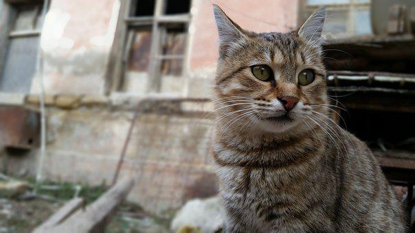 Pets, The Homeless, Cat, Ruins, The Lost, Animal, City