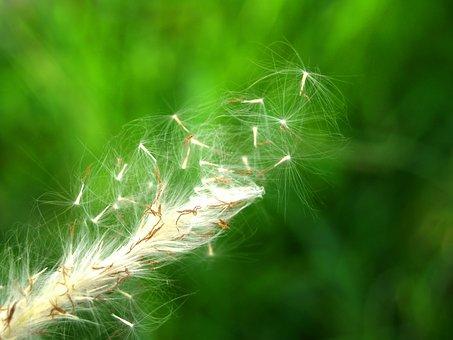Flower, Pressed, Wild, Stem, Leaf, Floral, Autumn