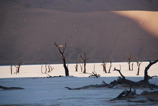 Desert, Forest, Tree, Nature, Dune