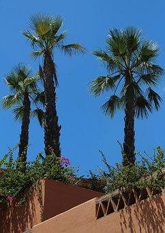 Holiday, Palm Trees, Sun, Palm, Beach, Tree, Ocean, Sky