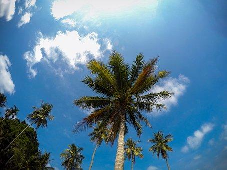 Blue Sky, Palm Tree, Palms, Beach, Tree, Blue, Sky