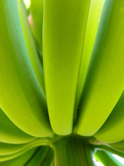 Banana, Banana Shrub, Green, Plant, Food