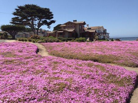 Magic Carpet, Monterey Pennisula, Pacific Grove, Ca
