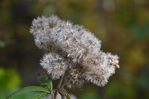 Autumn, Autumn Flowers, Plant, Nature