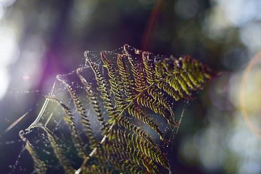 Web, Fern, Spectrum, Prism, Nature, Green, Leaf, Silk