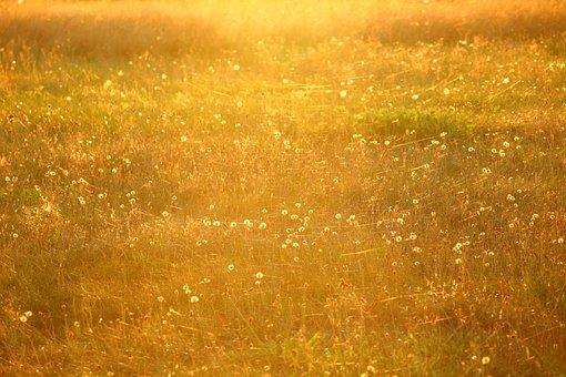 Meadow, Sun, Spider Webs, Summer, Evening Light