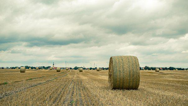 Field, Straw, Straw Bales, Harvest, Agriculture