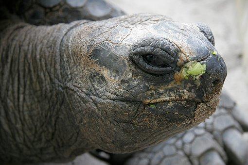 Animal, Turtle, Panzer, Slowly, Nature, Timeless, Close