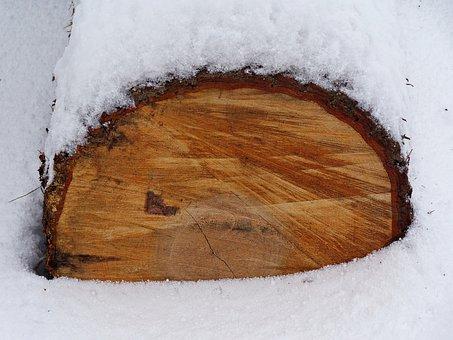 Snow, Winter, Trunk, Tree, Precipitation, Forest, Frost